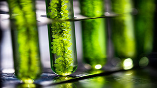 Tin makes electricity from algae
